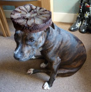 Dog with cake on her head